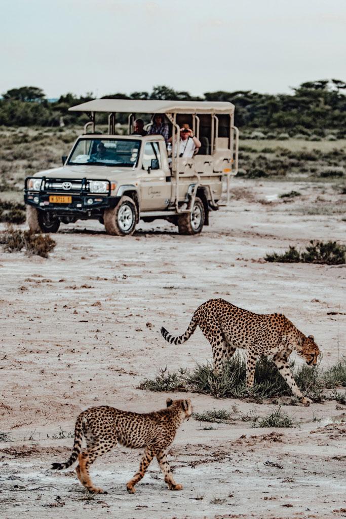 Onguma Safari Namibia