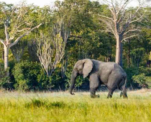 Relocation elephant