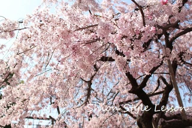 紅茶の会「春を楽しむお花見茶会」