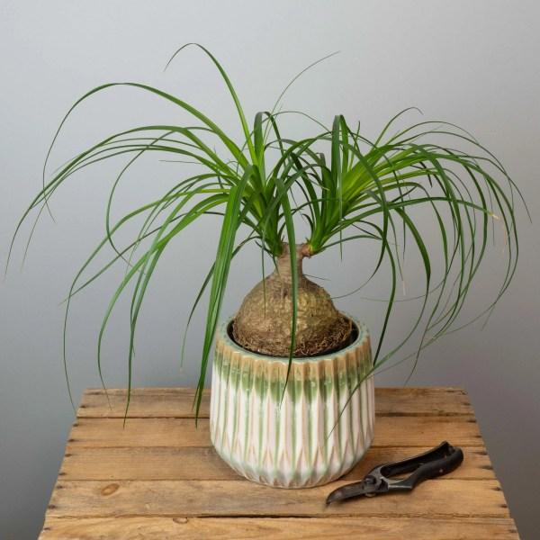 plante-verte-surprise-65-euros-atelier-lavarenne-fleuriste-lyon-2