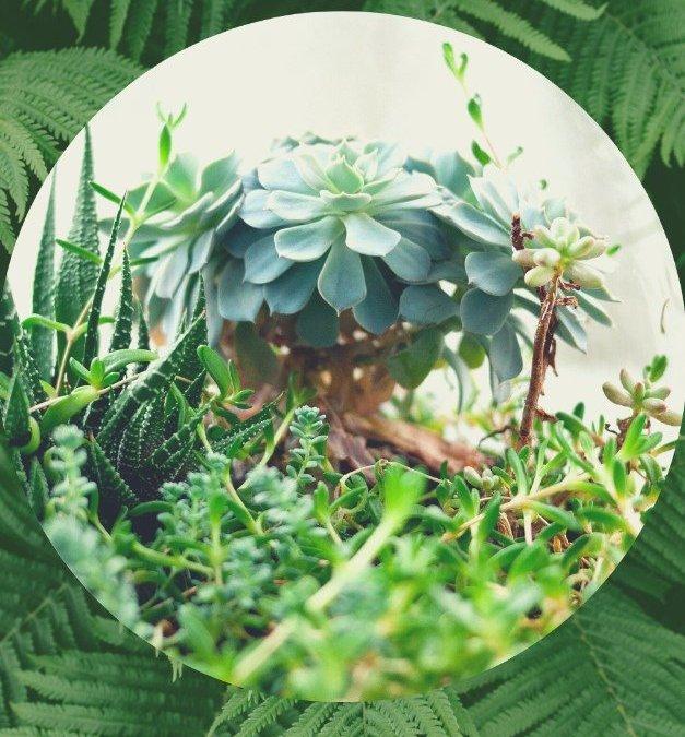 Viste de verde tu hogar con el estilo Urban Jungle