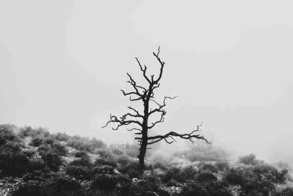 Fine-Art-Prints_Atelier.91_Monochrom_Baum und Nebel