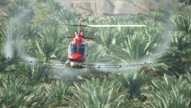 """Photo of باستخدام طائرتين عموديتين.. التوقيع على تنفيذ الرش الجوي لمكافحة حشرة """"دوباس النخيل"""""""
