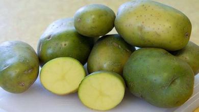 """صورة لها تأثير سام: الزراعة تصدر توضيحًا حول ما يتداول عن """"البطاطس الأخضر"""""""