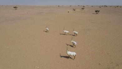 صورة دُشِّن اليوم: تعقّب حيوانات مهددة بالانقراض عبر الأقمار الاصطناعية والأجهزة الراديوية