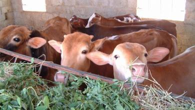 صورة تحصين وعلاج أكثر من 4 ملايين حيوان