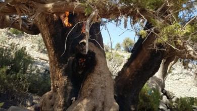 صورة البيئة تتفاعل مع حرق الشجرة المعمّرة