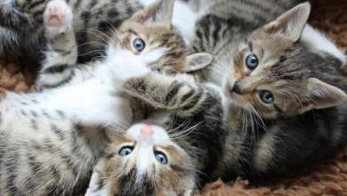 """صورة """"القطط"""" و""""الجزم"""" علامتان على تغيّر الأجواء في هذه الفترة"""