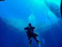 diver coming down to the wreck following a line