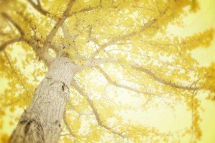 tree photo 3