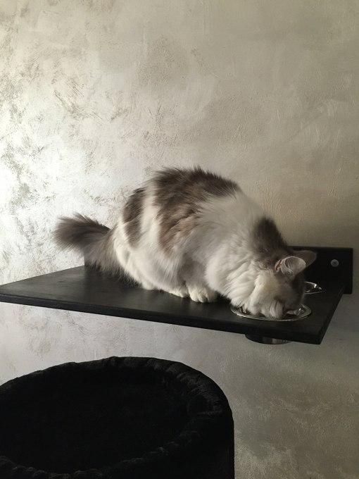 Mensola artigianale per gatti con ciotole
