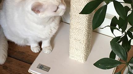 Tiragraffi per gatti in legno