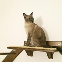 Palestra per gatti in legno
