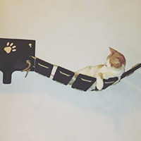 Ponte per gatti artigianale