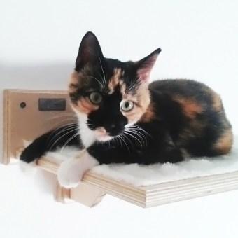 Mensole per gatti in legno artigianale