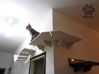 Mensola per gatti ad angolo in legno