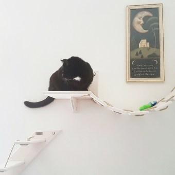Percorso per gatti in legno