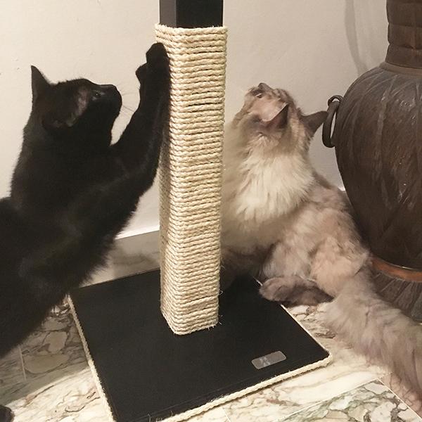 Tiragraffi legno gatto