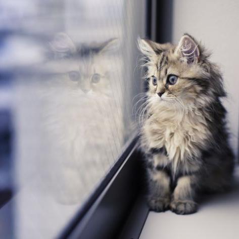gatto finestra