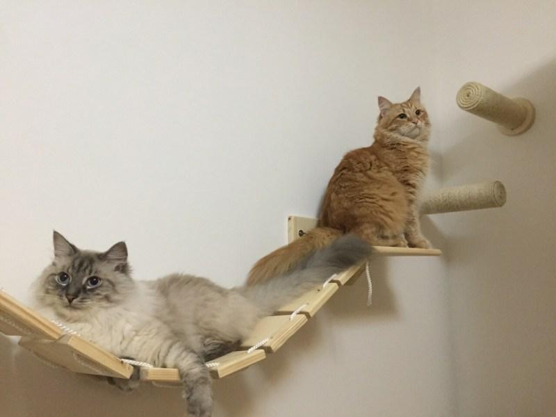 Ponte passerella per gatti artigianale