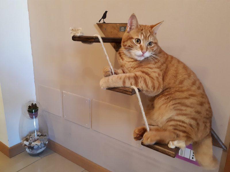 Scaletta per gatti Loki