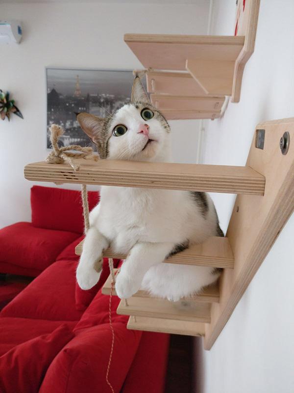 scaletta per gatti con Ghost