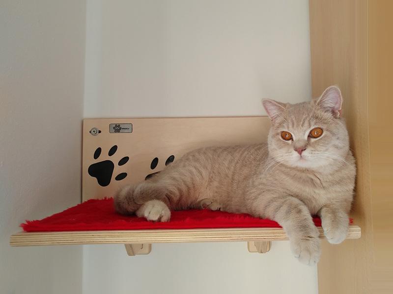 Mensola per gatti con Willy