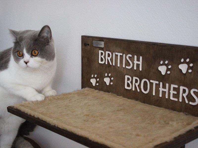 Mensola per gatti British Brothers