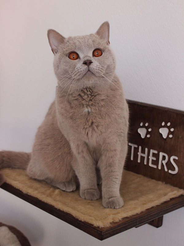 Mensola per gatti con nome inciso