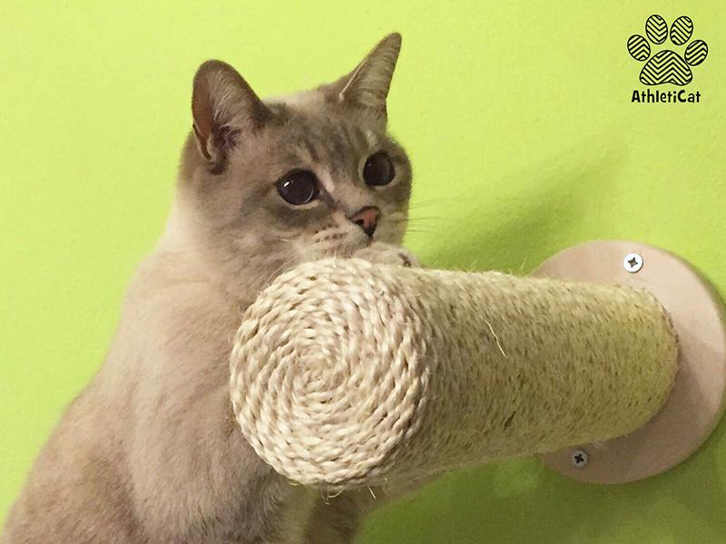 Parete attrezzata per gatti artigianale in legno-7