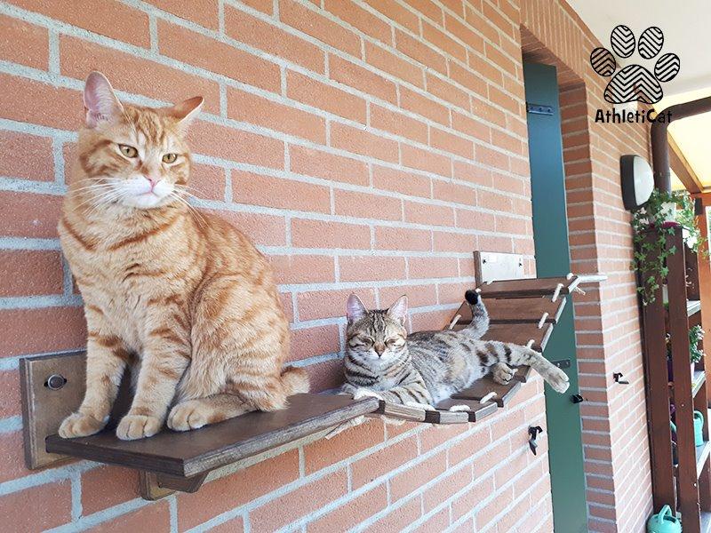 Ponte per gatti da esterno