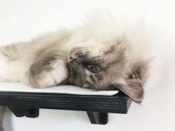 Mensola per gatti nera con tessuto beige