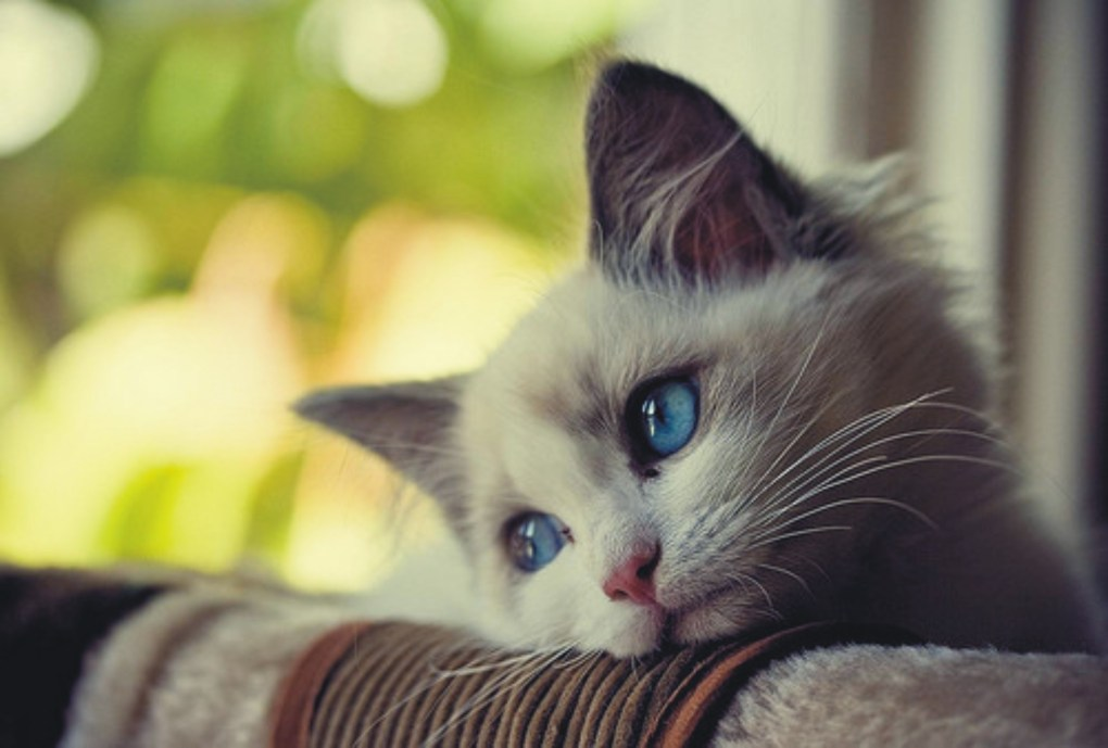 gatto depresso