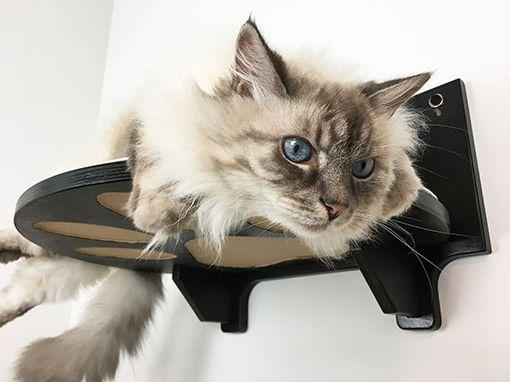 Mobili per gatti in legno
