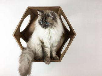 Cubo cuccia per gatti noce