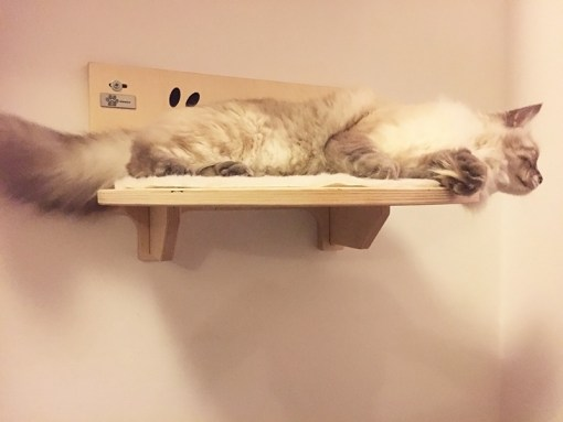 Cat shelf with carved writing