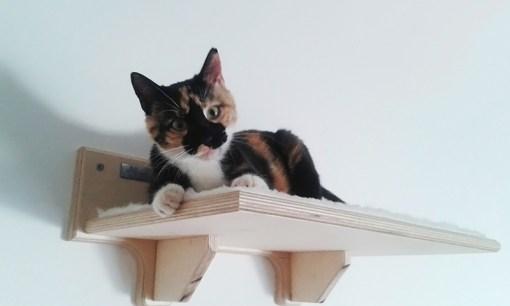 Cat shelf with fabric