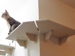 Corner cat shelf