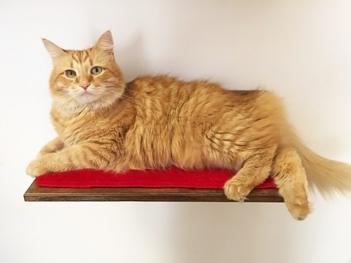Shelf for cats with peluche fabric