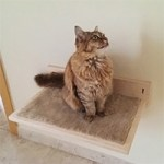 Wooden Shelf for cats
