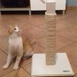 Wooden cat scratcher