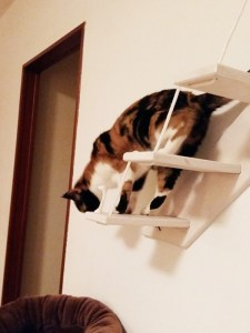 cat ladder