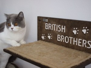 cat shelf with name