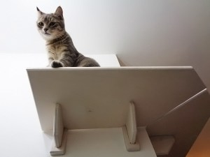 corner shelf for cats