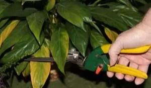 Gardening4_Blog2