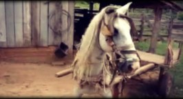 Το άλογο που ξέρει να παρκάρει…