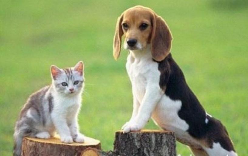 Νομοθεσία για αδέσποτα και δεσποζόμενα ζώα