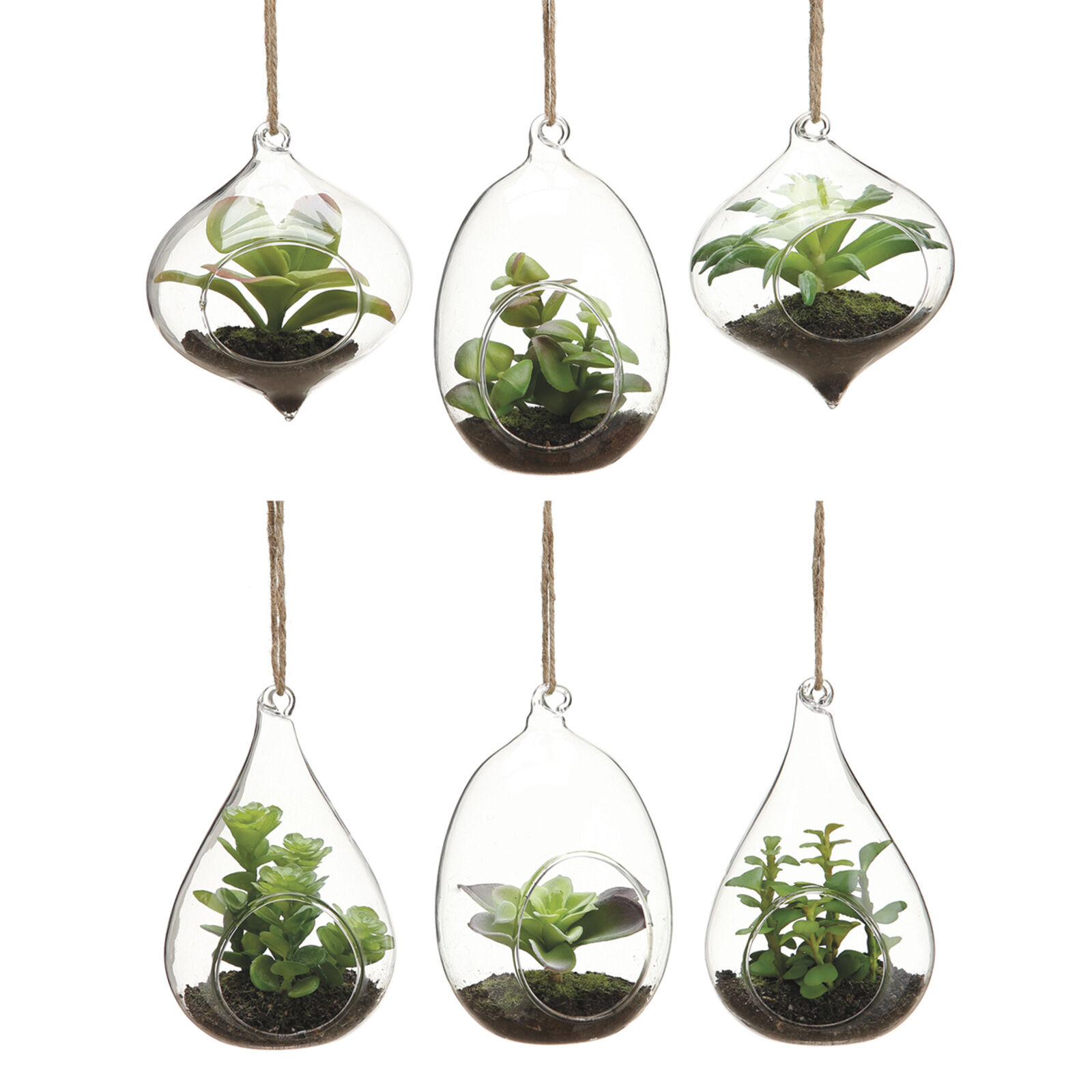 Hanging Succulents In Glass 45 In Assorted At Home