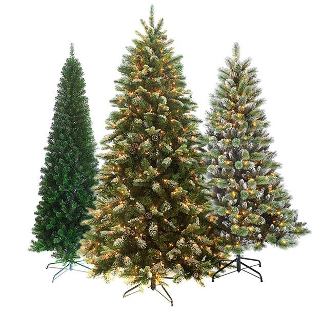 Types Live Xmas Trees