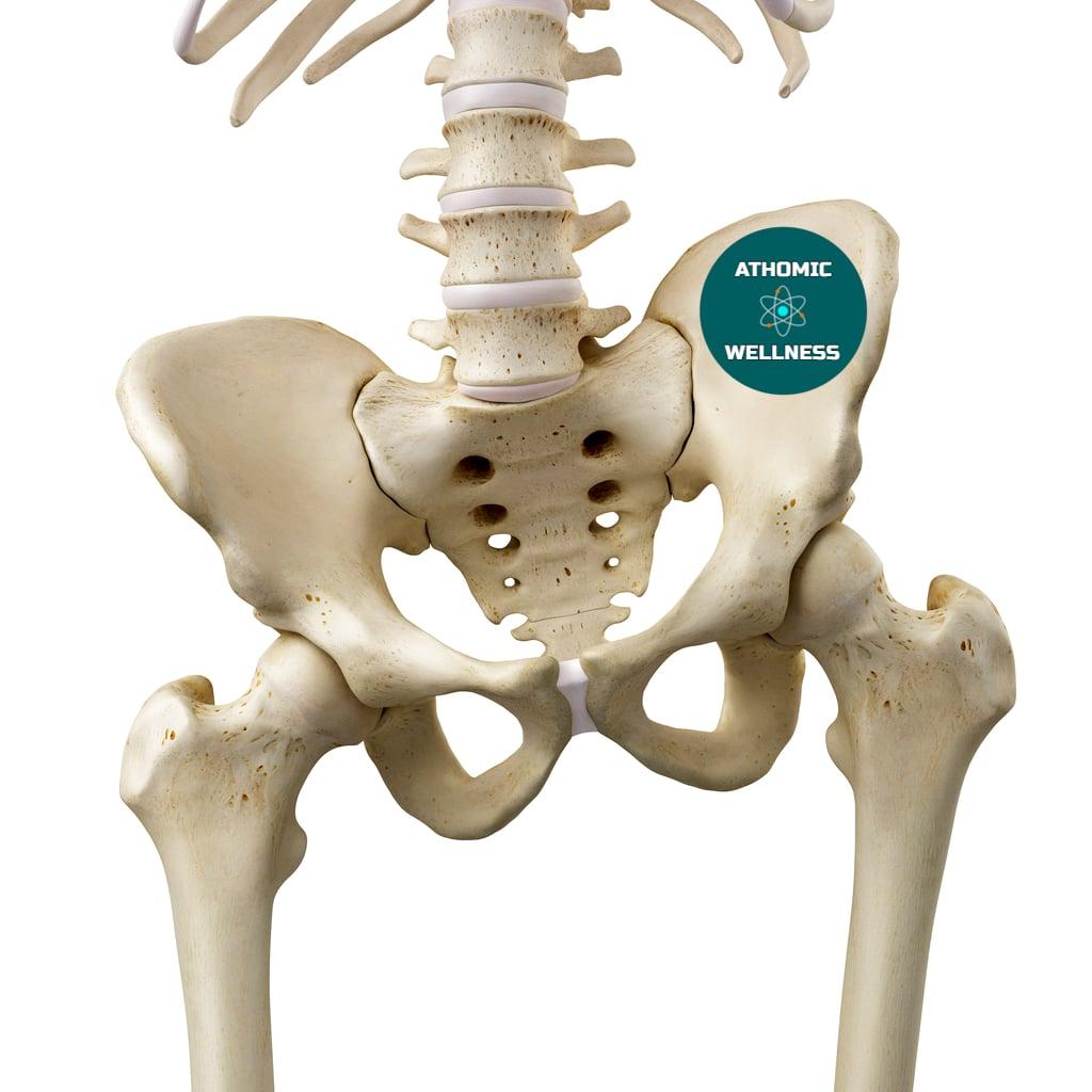 Image du squalette d'un bassin. Il illustre les déséquilibres musculaires - Blog Athomic Wellness